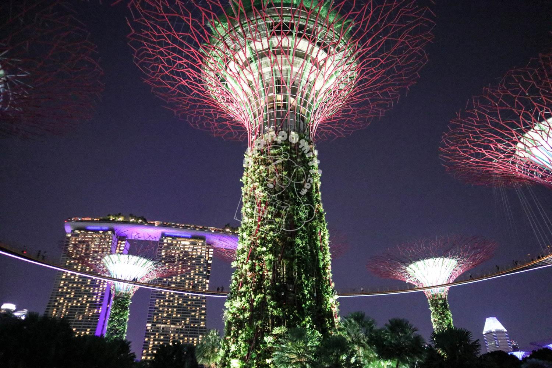 ガーデンズバイザベイ/シンガポール
