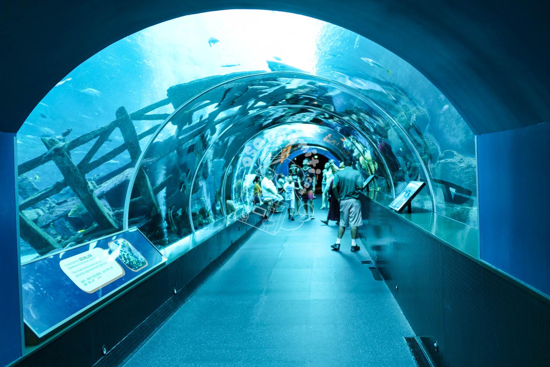 S.E.A. Aquarium/セントーサ島