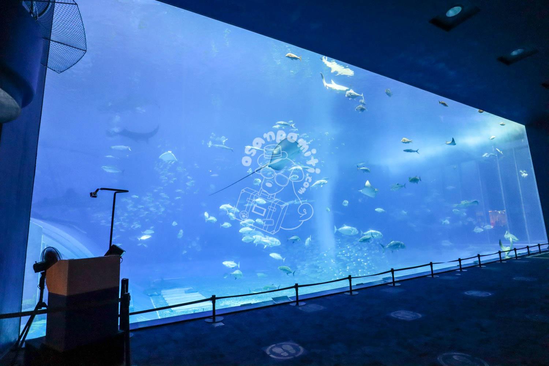 美ら海水族館/沖縄