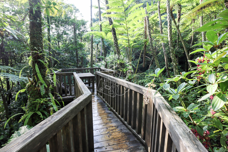 DINO恐竜PARKやんばる亜熱帯の森/沖縄